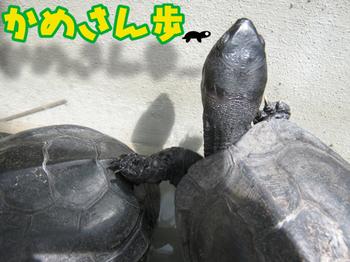 20150905-1.JPG